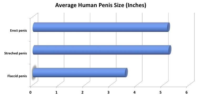 milyen kicsi a pénisz gyenge merevedés betegséggel