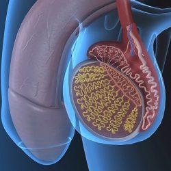 prosztatagyulladás és gyors erekció