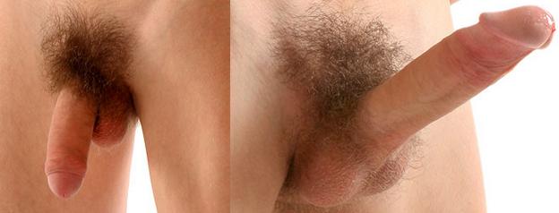 a pénisz megnagyobbodása az erekció során