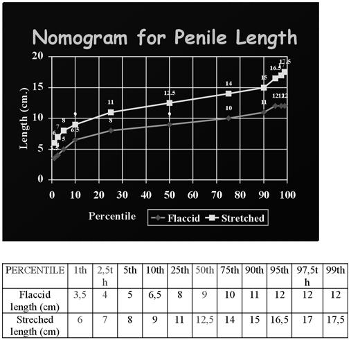 mandula merevedése erekció ultrahanggal