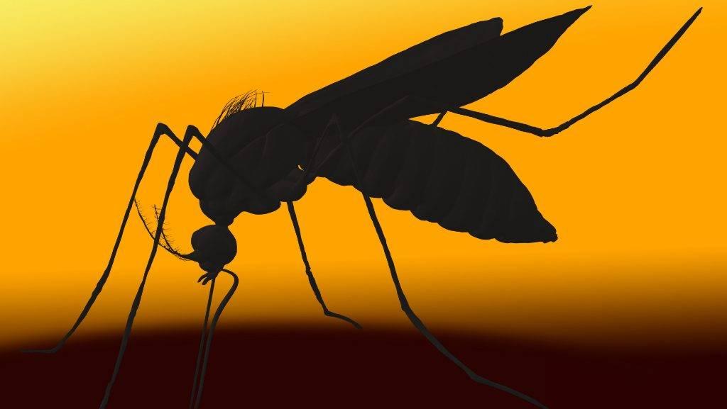 van-e pénze a szúnyognak átlátszó kisülés az erekció során