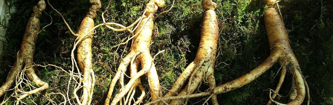 gyógynövények, amelyek meghosszabbítják az erekciót