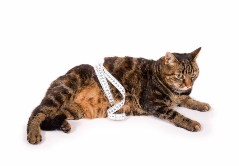 merevedés van-e kasztrált macskáknál hogyan kell pumpálni a péniszét