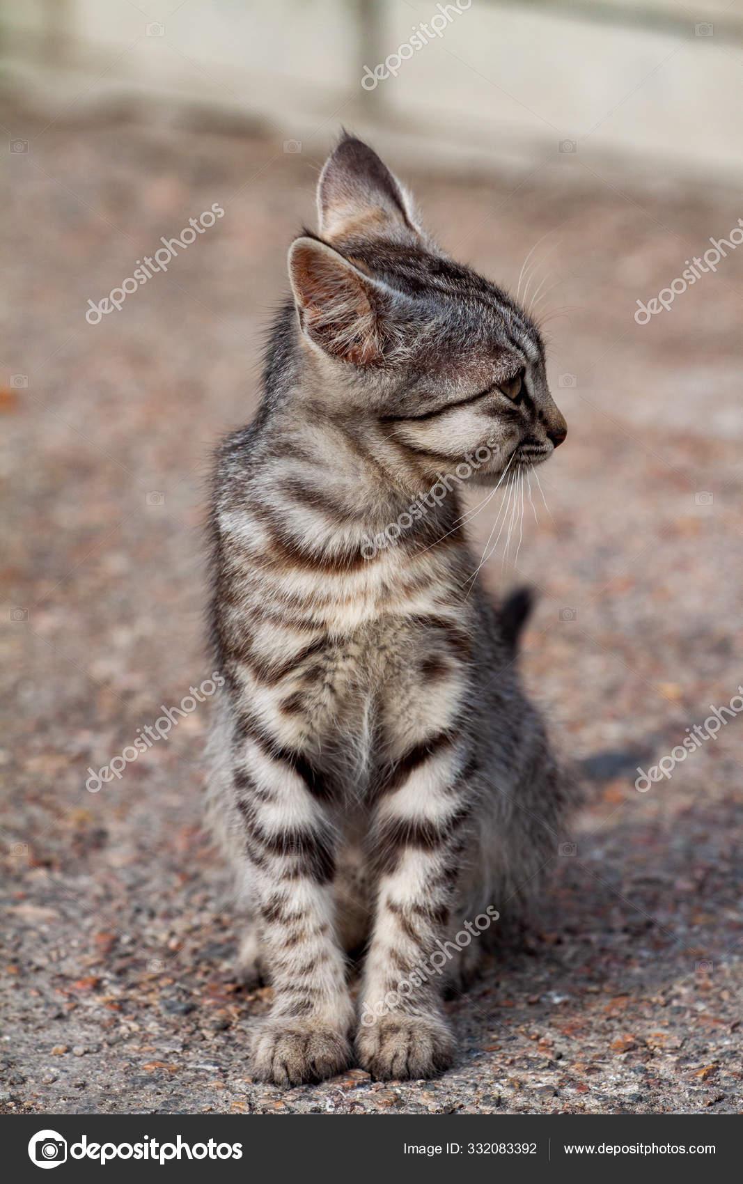 macska erekciós fotók
