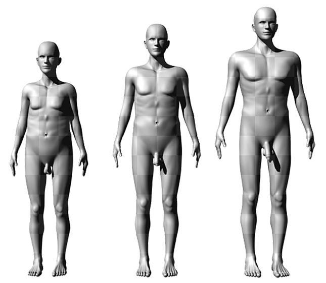 meztelen péniszméretek miért van kevés spermium az erekció során